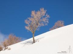 karger Baum unter stahlblauen Himmel