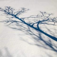 Schatten einer kleinen Birke auf dem Schnee